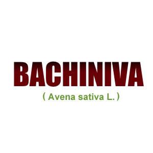 Bachiniva (Avena Sativa L.)