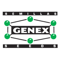 Genex-981 At (Sorghum bicolor)