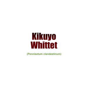 Kikuyo Whittet (Pennisetum Clandestinum)