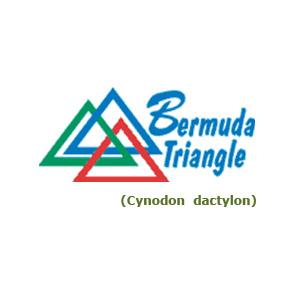 Mezcla Profesional De Bermudas (Cynodon Dactylon L.)