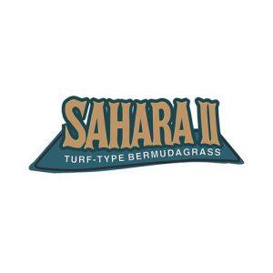 Bermuda Sahara II