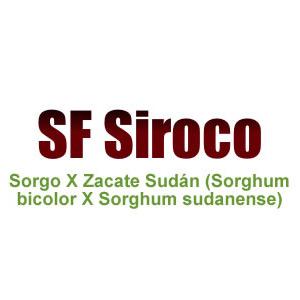 Sf Siroco Sorgo X Zacate Sudán (Sorghum bicolor X Sorghum Sudanense)