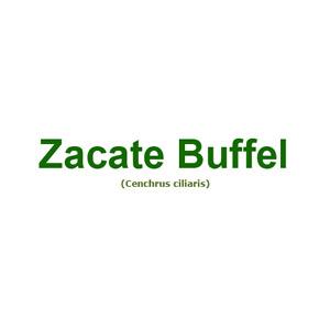 Buffel archivos semillas san francisco for Zacate de invierno